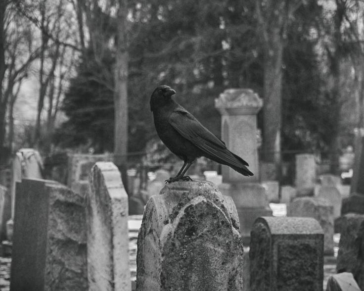 black-and-white-graveyard-crow-gothicrow-images